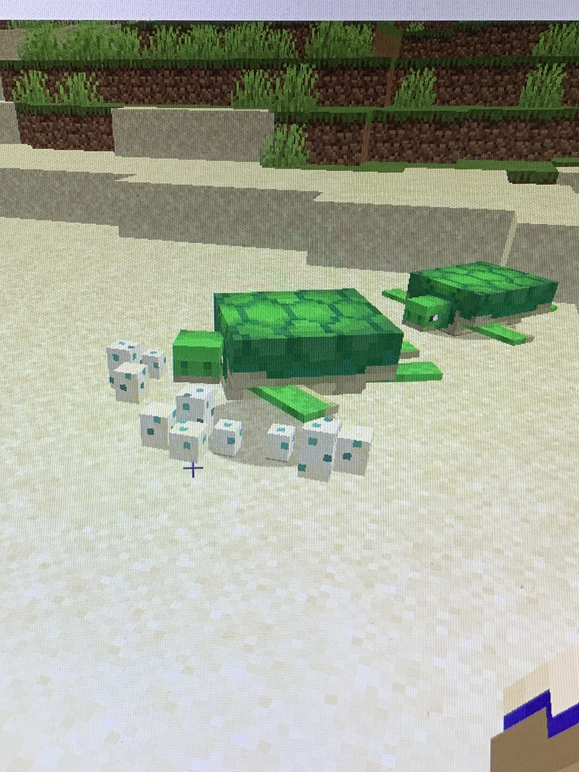 Two turtles in Minecraft laying eggs
